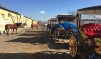 Adalar'da atları satın alma işlemi başladı