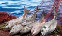 Amerika Pazarında Türk Balığına Olan İlgi Artıyor