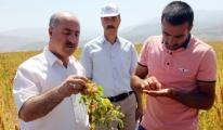 Astronot bitkisi Kinoa Bingöl'de İlk Kez Ekildi video