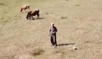 Çobanın dronla imtihanı! video