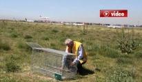 DHMİ Hayvanlarla Mücadele Timi Apronda Köpeği Bulamadı