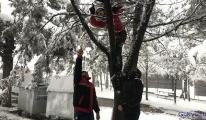 Dron, sert rüzgârın etkisiyle ağacın dallarına takıldı