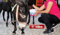 Kansere karşı Eşek sütü litresi 200 TL