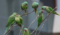Gördüğünüz papağanları ihbar edin...