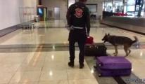 Gümrük Muhafaza Kaçakçılara göz açtırmıyor(video)