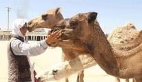 Havaalanı develere kaldı