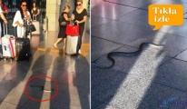 Havalimanı'nda yılan paniği