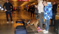 Havalimanında K-9 Köpekleri Bomba İzi Sürüyor