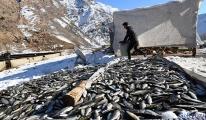 Havasız kalan 12 ton alabalık telef oldu(video)
