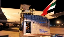 SkyCargo, İki Uçakla 112 At'ı İngiltere'ye Taşıdı!