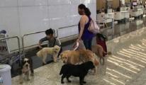 İstanbul Havalimanı'nda evcil hayvanlara tatil köyü hizmeti!