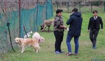 Kanseri koklayarak teşhis edecek köpekler yetiştiriliyor