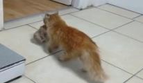 Kedi ağzında taşıdığı yavrularını veterinere getirdi(video)