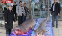 Köpek Balıkları Kanser Hastalarına Şifa Olacak