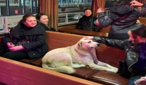 Köpek her gün vapurla Kadıköy'den Beşiktaş'a geçiyor