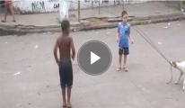 Köpek Salladı Çocuklar İp Atladı