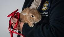 Minik tavşan bomba paniğine neden oldu!