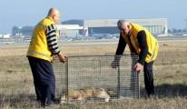 Pilotlara pas geçirten köpekler için özel tim