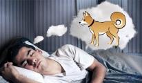 Rüyada Köpek Pisliği Temizlemek