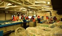 Sabiha Gökçen Havalimanı'nda 12 bin 410 ton atık toplandı