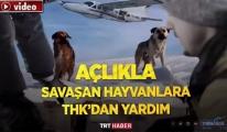 THK uçağıyla köpeklere yiyecek atıldı!video