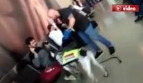 THY Yolcuları, Viyana'da  Köpekle Arandı video