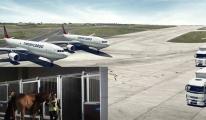 Turkish Cargo, 15 atı ABD'den İstanbul'a getirdi
