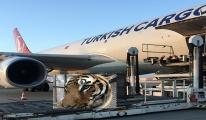 Turkish Cargo, vahşi hayvanları İstanbul'a getirdi!