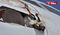 Uçağa Çarpan Kuş Hava Trafiğini Etkiledi
