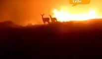 Uçaklar kullanılsa 1 hektar bile yanmazdı