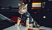 Ukrayna'da donmaktan kurtarılan kedi