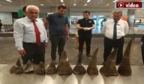 video Atatürk Havalimanı'nda Gergedan Boynuzu Yakalandı