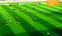 video Futbol karşılaşması sahayı arılar bastı