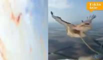 video Yolcu uçağının kokpit camına kuş çarptı!