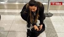 Yavru köpek havalimanında unutuldu! video