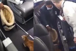 Bebek kanguru yolcularla birlikte sehayat etti(video)