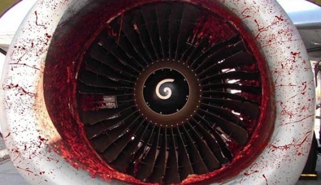 AnadoluJet Uçağının Motoruna Leylek Çarptı