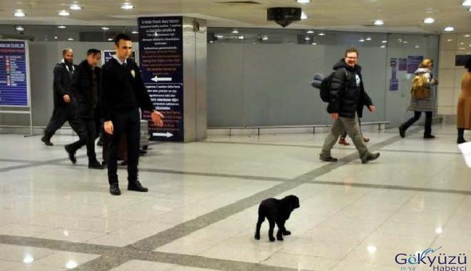 Atatürk Havalimanı'na hayvanlar da veda etti!