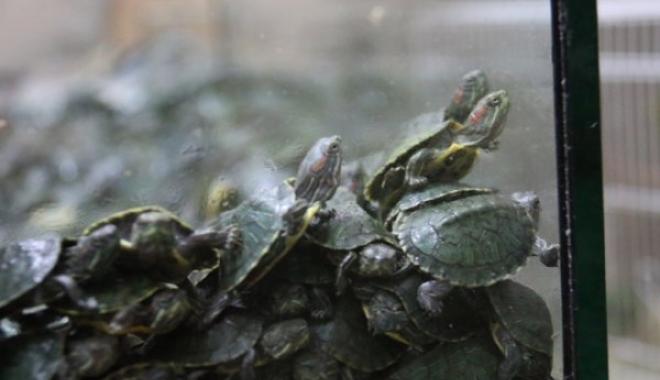 Gümrüğe Takılan Kaplumbağalar Pet Shop'da