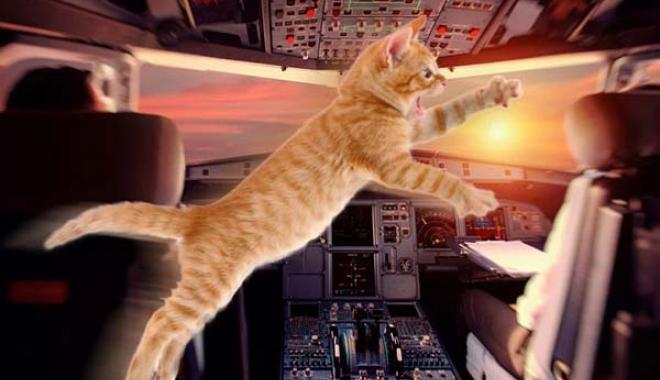 #Havadaki uçağın pilotuna kedi saldırdı