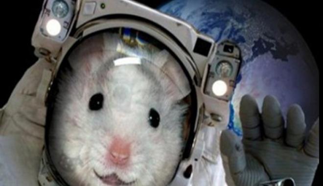 Rusya uzaya fare gönderecek!