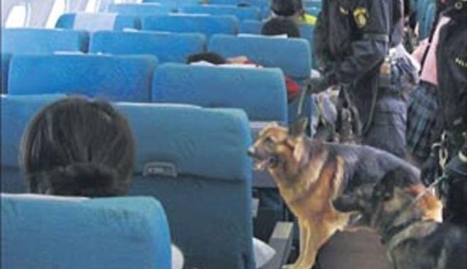 THY uçağında köpeklerle arama yapıldı!