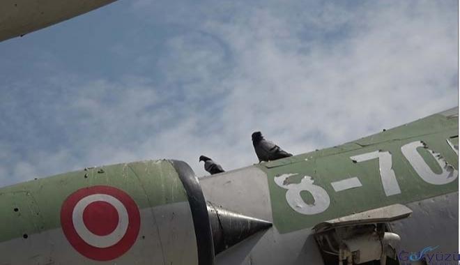 'Uçan tabut' kuşlara yuva oldu