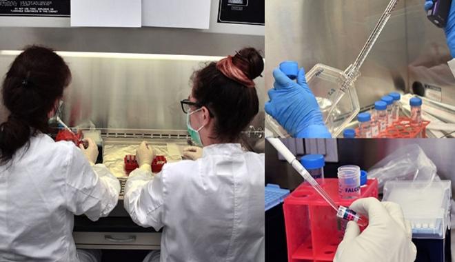 Uzayda yetişen 3D organoidler