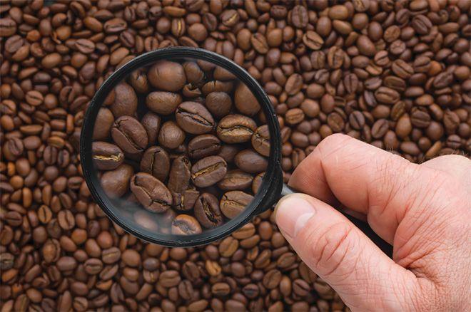 Barista Şampiyonası'nın kahve çekirdekleri NESCAFÉ'den