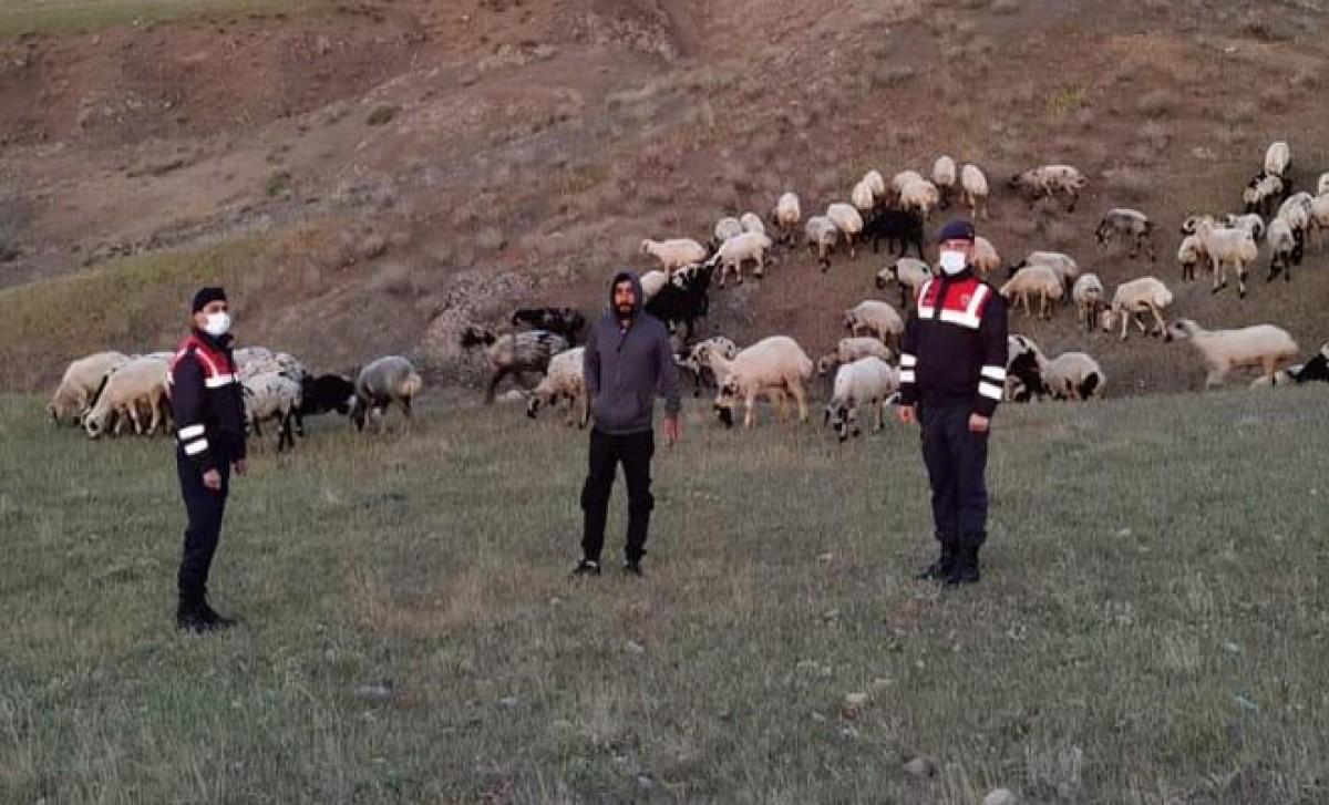 #Kayıp 190 hayvan, dronla 9 saatte bulundu