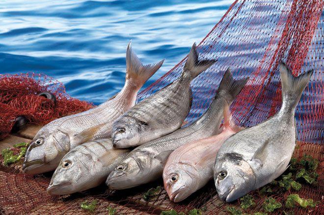 Türk Balığını Hava Kargo İle Taşımak İçin Yarışıyor!