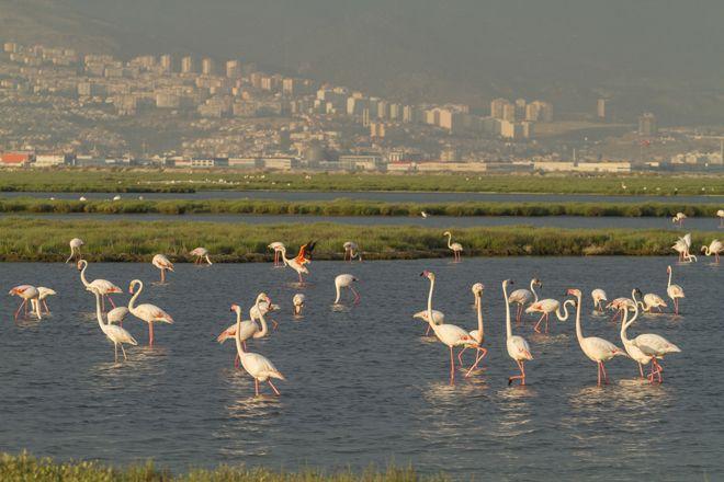 Türkiye'nin İlk UNESCO Dünya Doğa Mirası Olabilir